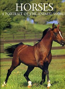 Horses. A Portrait of the Animal World